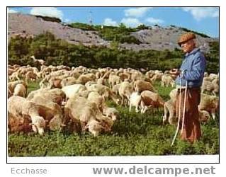 Scène Pastorale De Provence 0/52 Troupeau De Moutons Et Berger - Elevage