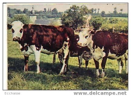 Carte Fabriquée Vaches - Elevage