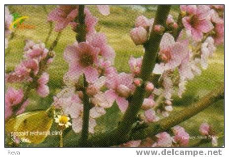 BHUTAN 500 NU  FLOWER FLOWERS  ORCHID ORCHIDS ? BUTTERFLY GSM  MOBILE PHONE - Bhutan