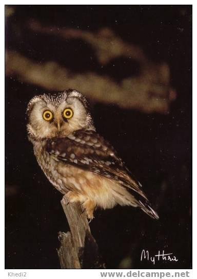 CP MYTHRA Hibou Chouette De Tengmalm - OWL Postcard - EULE Postkarte - 02 - Oiseaux