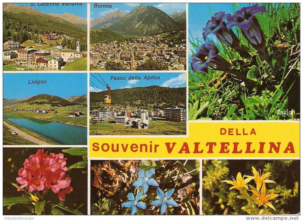 CF2064 - VALTELLINA - Cartolina Viaggiata ( 1984 ) - Altre Città