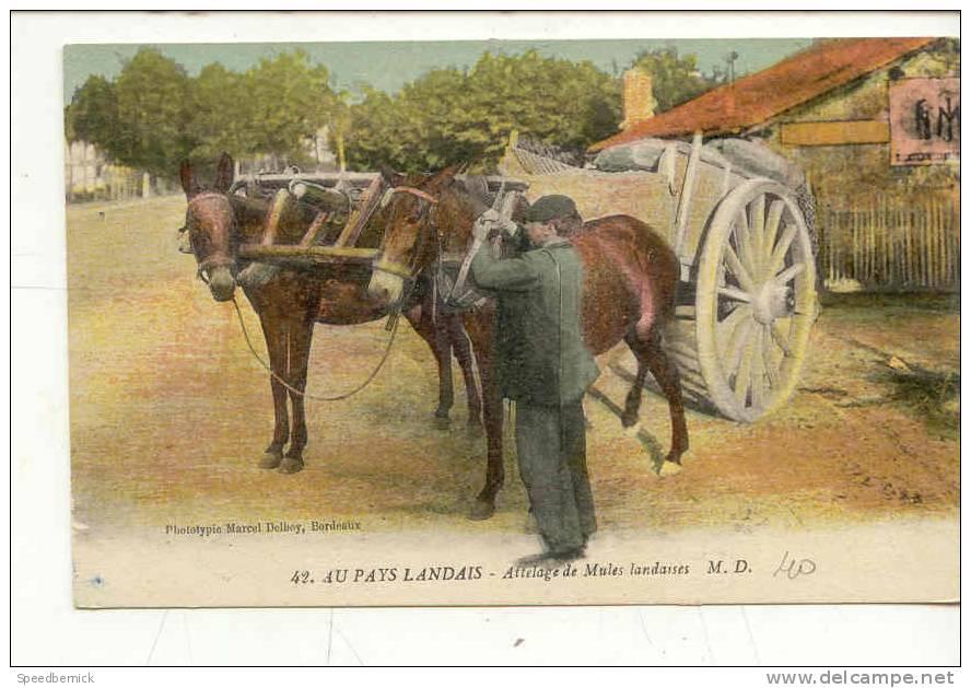 8041 Au Pays Landais . Attelage De Mules Landaises .42 M.D. - France