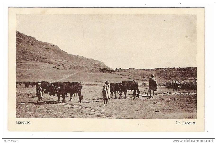 ETHNOGRAPHIE AFRICAINE / LESSOUTO  ( LESOTHO ) / LABOURS  ( Araire Archaïque ! ) / Cliché ATAR - Lesotho