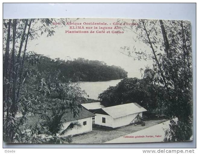 Elima Sur Lagune Abi Plantation De Café Et Cacao - Côte-d'Ivoire