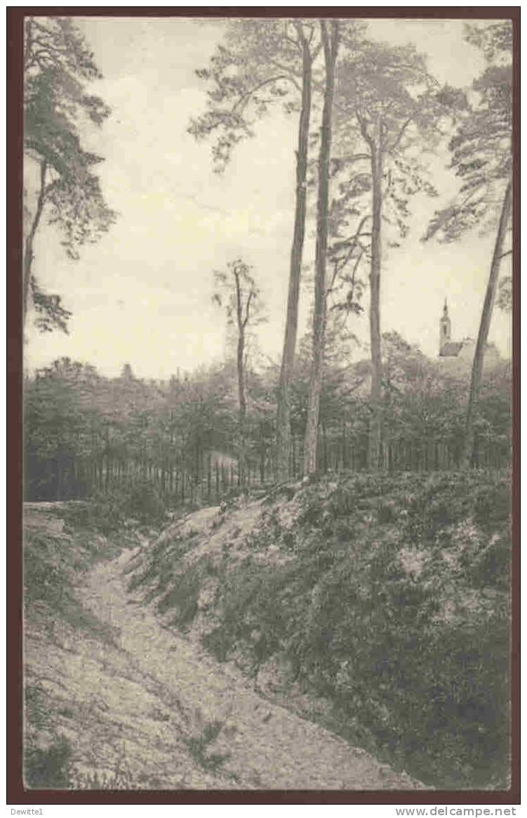 Averbode  Een Holleweg In 't Bos  1912 - Scherpenheuvel-Zichem
