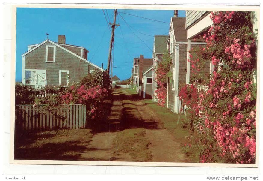 10530 Rose Covered Cottage Nantucket Island . MA2341D Photo Dick Mackay . - Nantucket