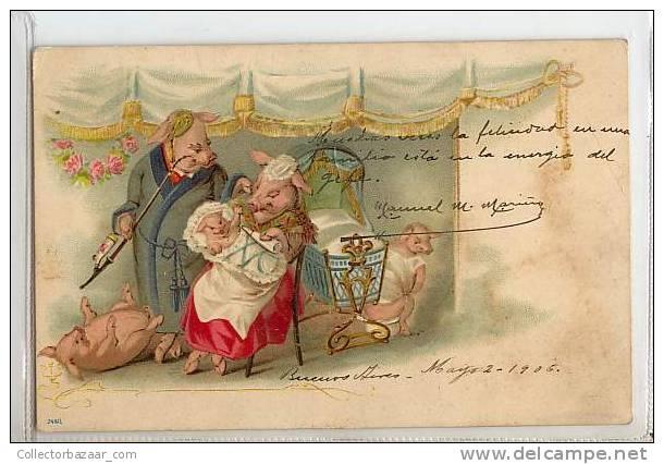 VINTAGE Ca1900 Postal Postcard With Family Of Pigs Familia De Cerdos - Cerdos