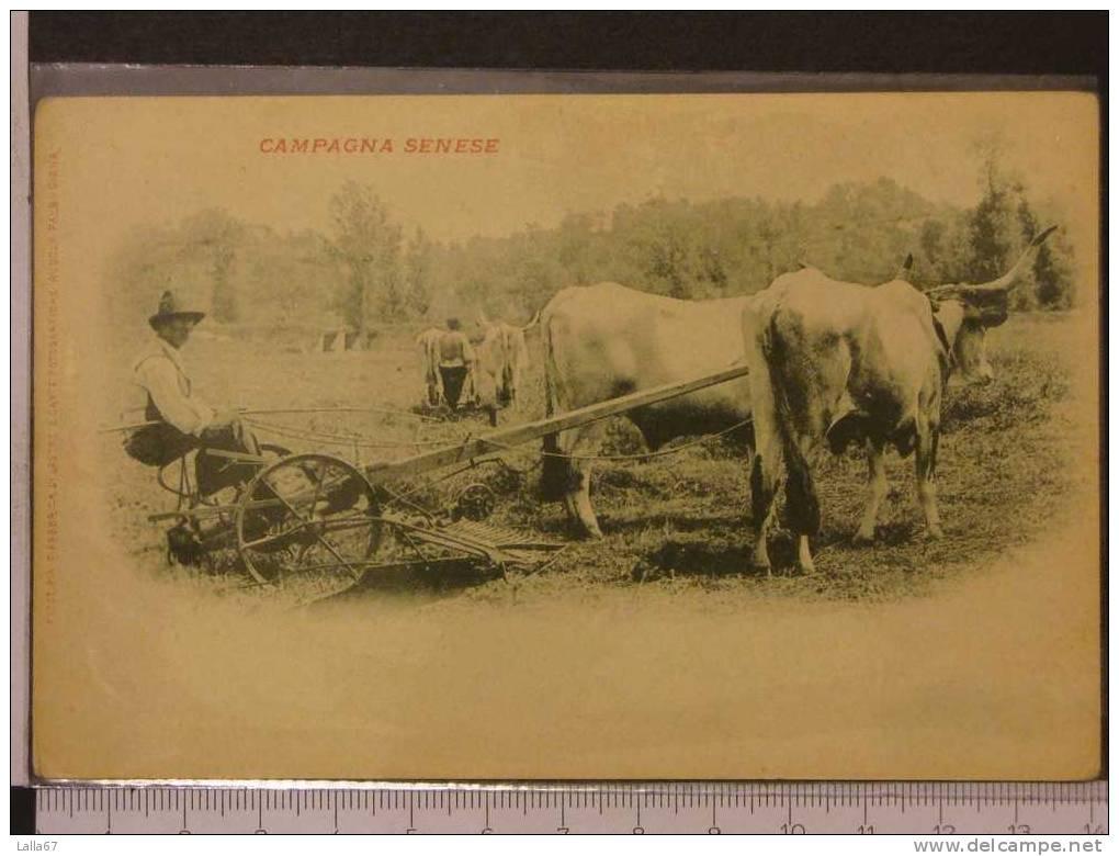 SIENA - CAMPAGNA SENESE (NUOVA) N. 1847 - Siena