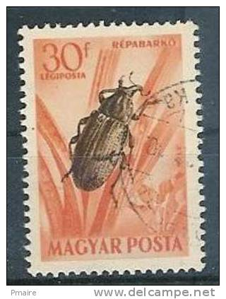 Insecte Hongrie - Insekten