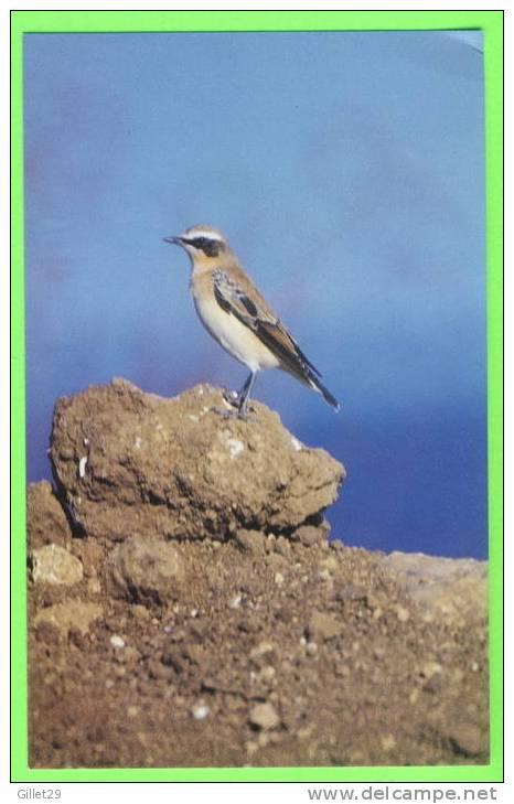 OISEAU - TRAQUET MOTTEUX - Oenanthe Oenanthe - COSTINESTI, ROUMANIE - ÉCRITE EN 1995 - TIRAGE LIMITÉE No 37/500 Ex. - - Oiseaux