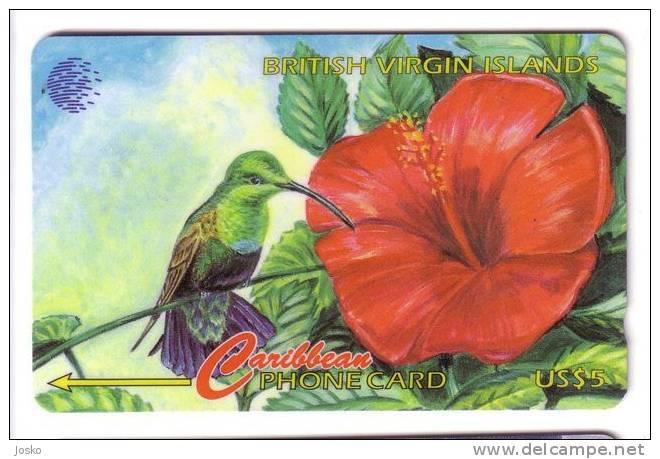 HUMINGBIRD - BVI Wild Life  ( British Virgin Islands - 91CBVA ) ** Bird Oiseau Birds Oiseaux Flower Fleur Flowers Fleurs - Vierges (îles)