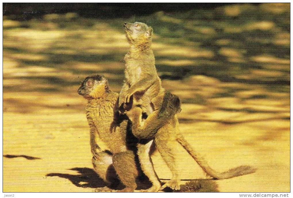CPM  Madagascar  Lemuriens - Madagascar