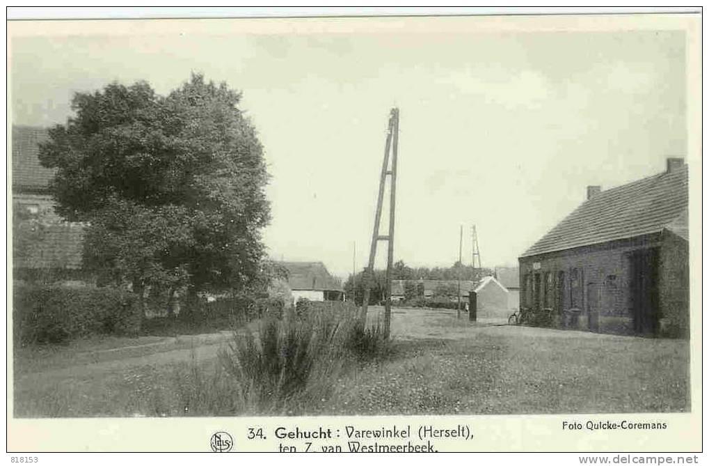 Varewinkel - 34 -Gehucht - Herselt