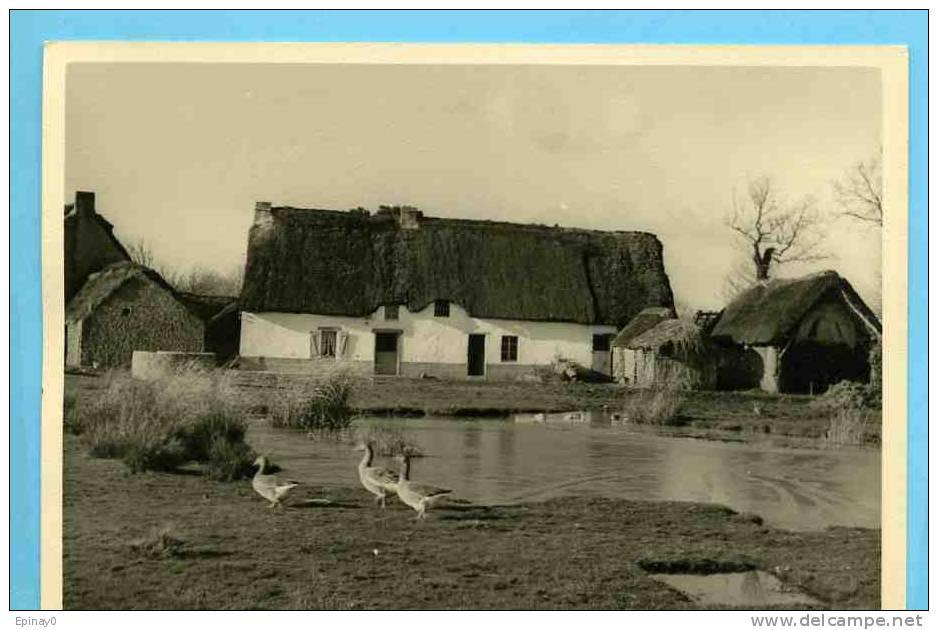 B - 44 - SAINT JOACHIM - édition Cholet N° 1420 - Grande  Briére  - Bréca - Chaumiére - Saint-Joachim