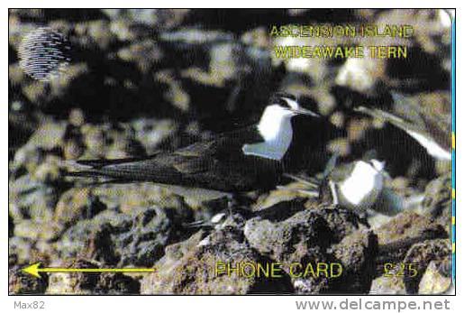 ASCENSION / ASC - M 3D - Ascension (Insel)