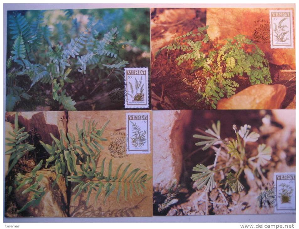 AFRICA SUR Afrique Sud South VENDA Flora Flore Flores Flowers Ferns Fougeres Helechos 4 MAXIMA Maximum Card Carte - Végétaux