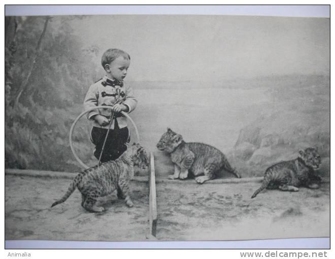 Cirque Petit Garçon Dressant Des Lionceaux - Lions