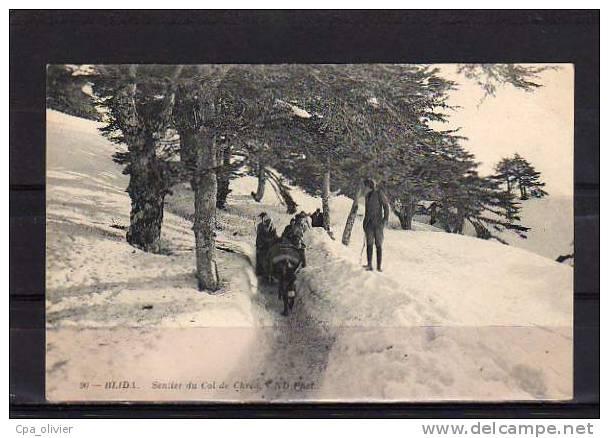 ALGERIE Blida Sentier Du Col De Chréa, Animée, Neige, Hiver, Ed ND 90, 191? - Blida