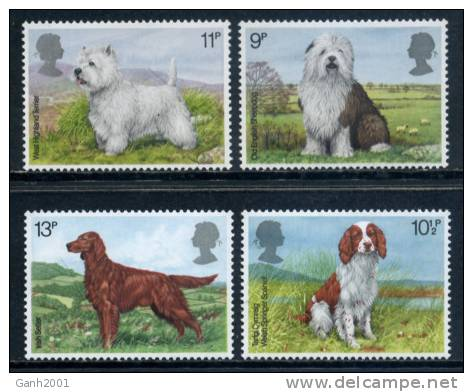 INGLATERRA ENGLAND / FAUNA PERROS Dogs / Cm04 - Perros