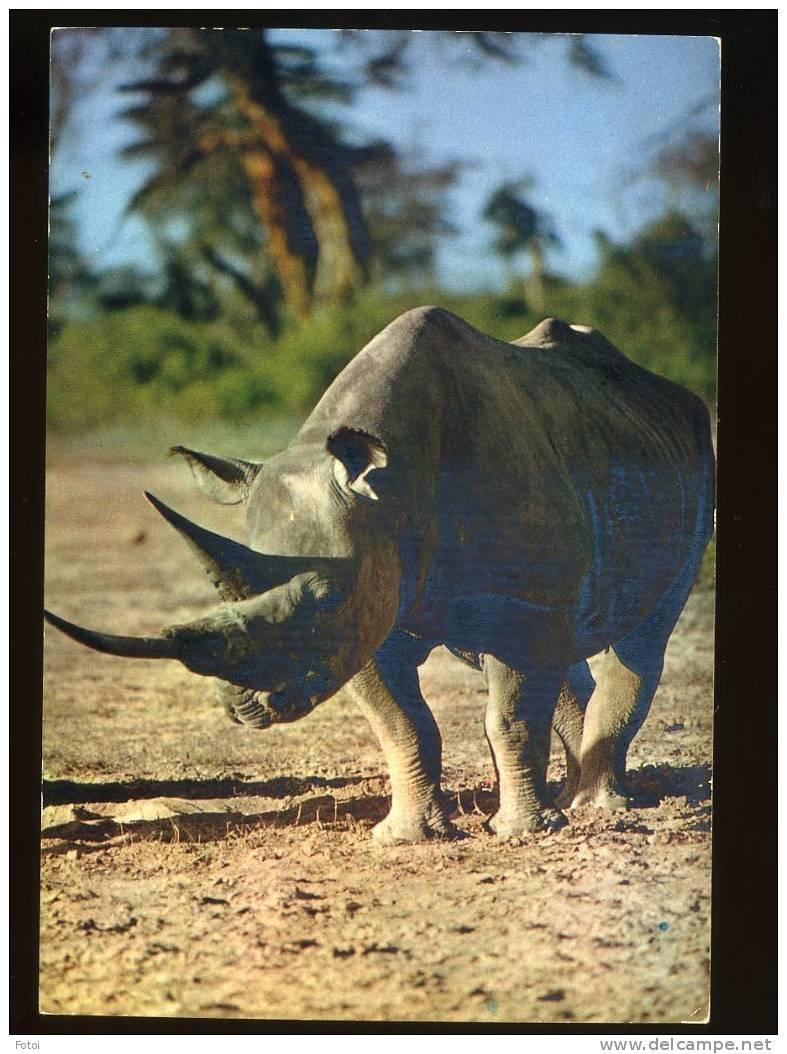 REAL PHOTO POSTCARD AFRICAN FAUNA RHINOCEROS VERTICAL - Postcards
