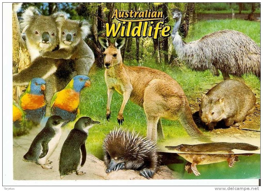 POSTAL DE AUSTRALIA DE DIVERSOS ANIMALES (ANIMALES-ANIMALS) - Animali