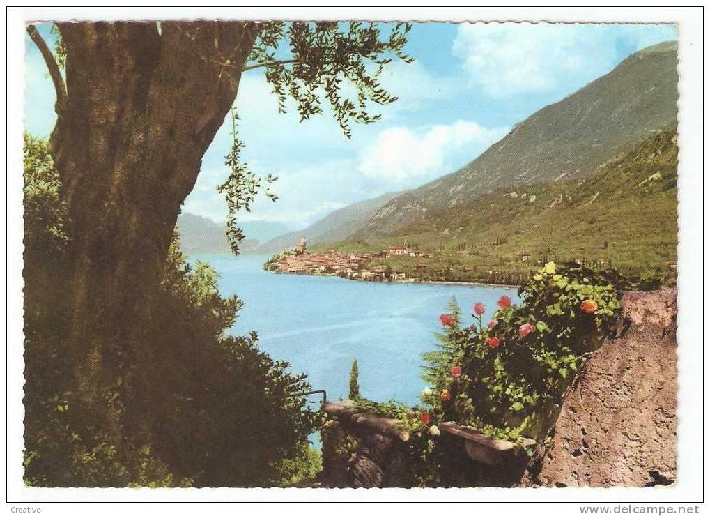MALCESINE. 1964 Lago Di Garda.Panorama - Italia