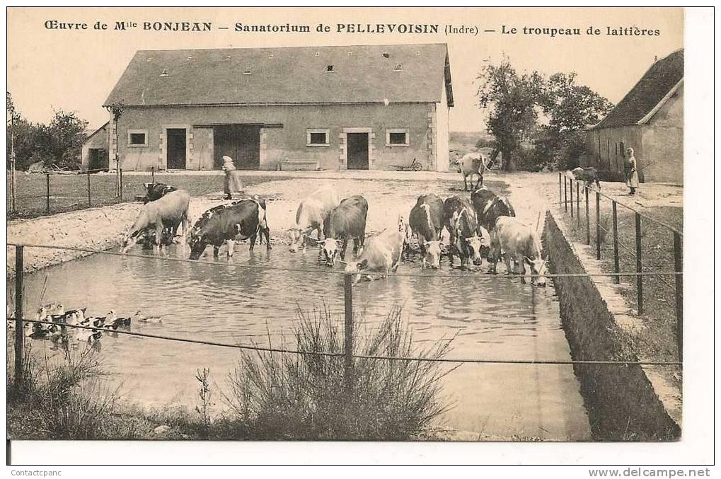 PELLEVOISIN  - Oeuvre De Mlle  Bonjean  - Le Sanatorium  - Le Troupeau De Laitieres - France