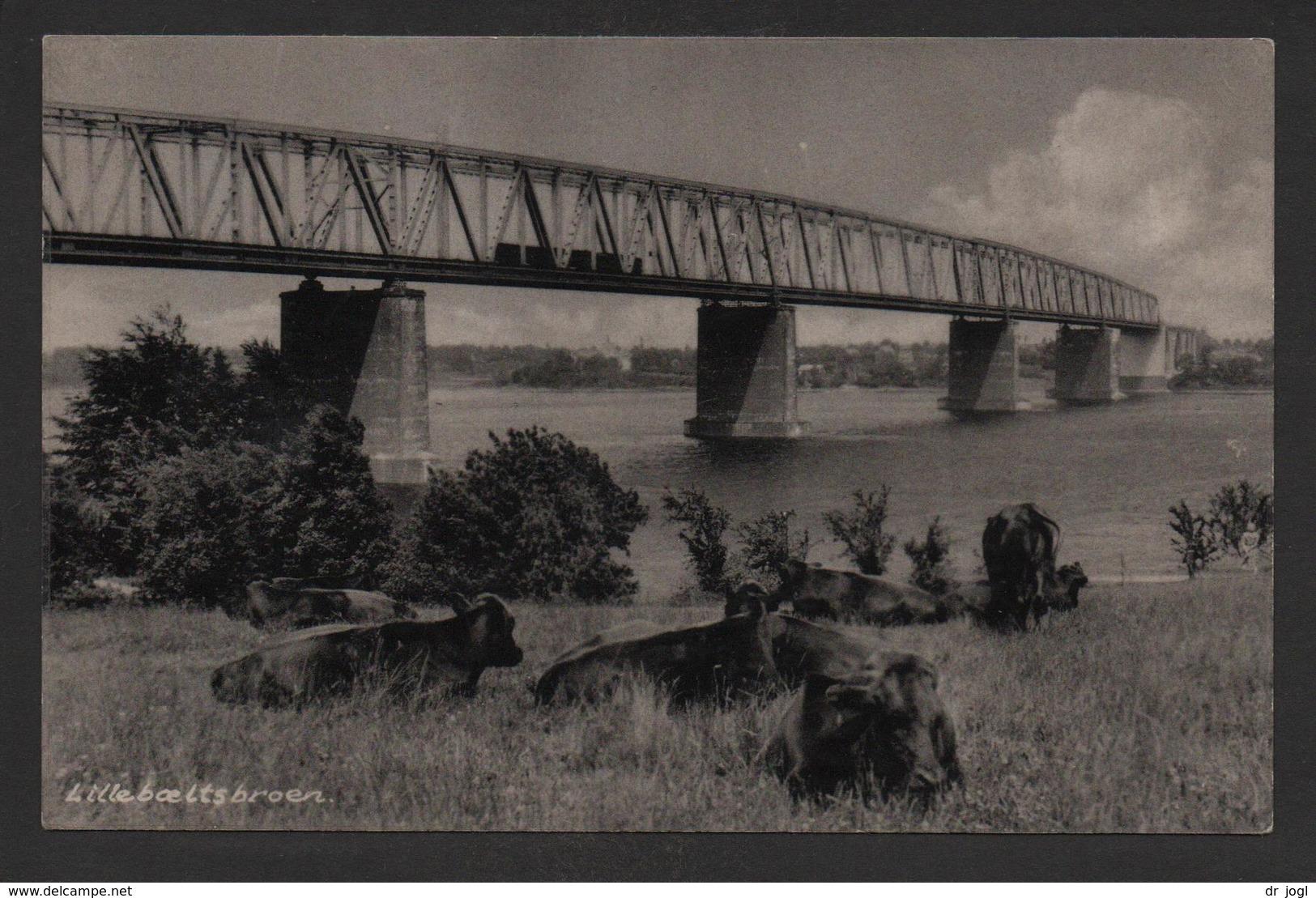 DK45) Denmark - Lillebæltsbroen - Bridge & Cows - Danemark