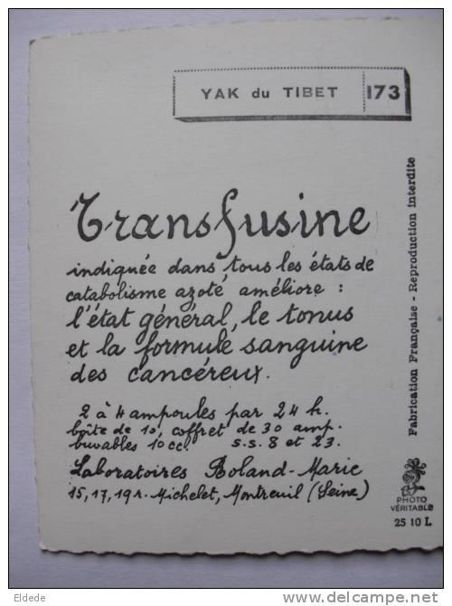 Yack Du Tibet Thibet Pub Transfusine Labo Roland Marie Montreuil Sur Seine - Tibet