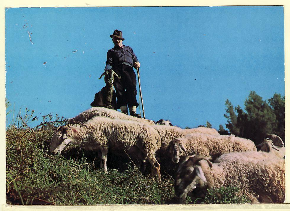 BERGER BOUC TROUPEAU MOUTONS PATURAGE Dans Nos MONTAGNES CPM 1980s  ¤ ADIA OF 1001 ¤ AGRICULTURE ¤ CPAGR 5302AA - Elevage