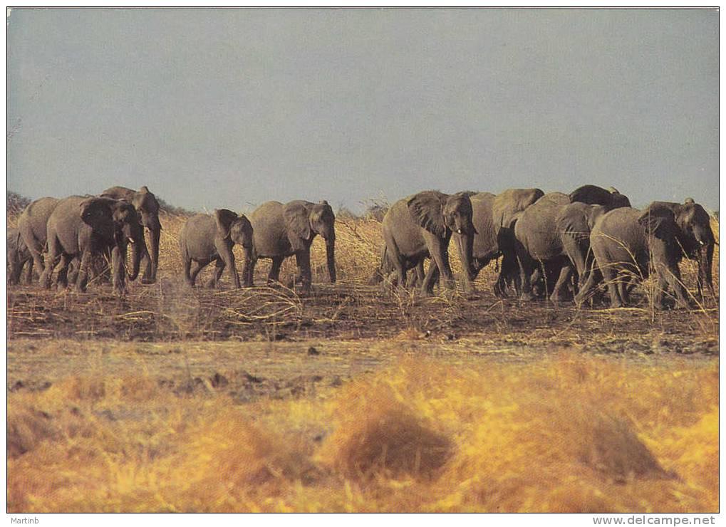 WAZA  Reserve Du NORD CAMEROUN  Troupeau D' ELEPHANTS - Elephants