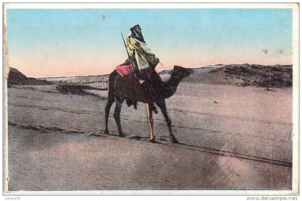 LE DROMADAIRE THE KING OF THE DESERT ED CASTRO & GIRO - Animals