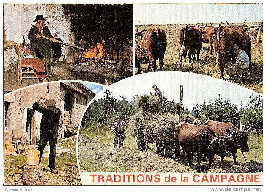 CP Traditions De La Campagne Multivues Multi Vues Bucheron Fenaison Cheminée  46 Lot - France