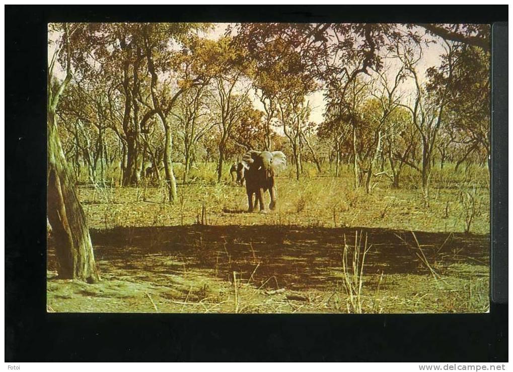 PHOTO POSTCARD ELEPHANT GORONGOSA  BEIRA MOÇAMBIQUE AFRICA CARTE POSTAL - Mozambique