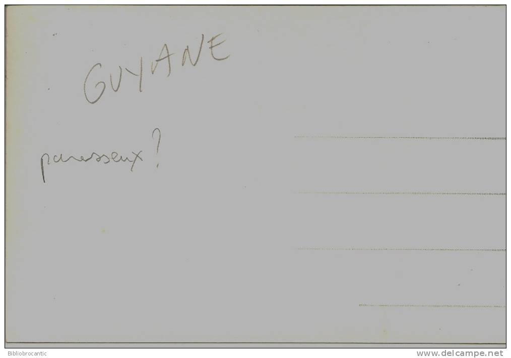 GUYANE -CARTE PHOTOGRAPHIE REELLE - PARESSEUX  DE GUYANE - Ohne Zuordnung