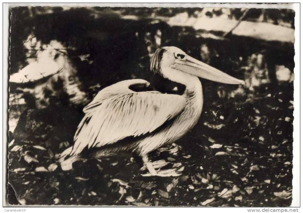 CPSM   PELICAN (33) Pub TRANSFUSINE   1957   4/634 - Oiseaux