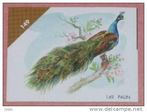 PEACOCK ( Croatia Sticker ) * Paon Pavo Real Pfau Pavone Pavao Pauw Oiseau Bird Ave Vogel Uccello * Croatie Autocollant - Stickers