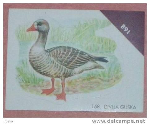 WILD GOOSE ( Croatia Sticker ) Greylag Oie Sauvage Oca Salvaje Gans  Oiseau Bird Ave Vogel Uccello * Croatie Autocollant - Stickers