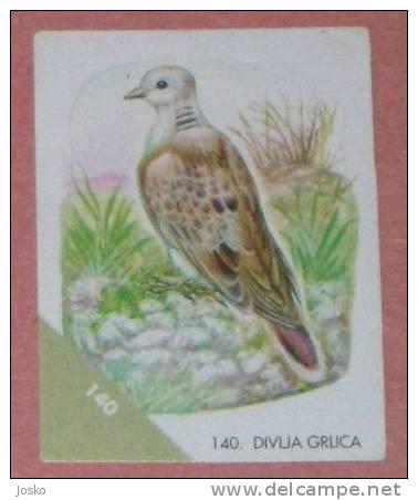 TURTLE DOVE 1. ( Croatia Sticker ) Tourterelle Tortola Tortora  Oiseau Bird Ave Pajaro Vogel Uccello Croatie Autocollant - Stickers