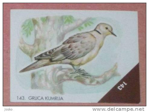 TURTLE DOVE 2. ( Croatia Sticker ) Tourterelle Tortola Tortora  Oiseau Bird Ave Pajaro Vogel Uccello Croatie Autocollant - Stickers