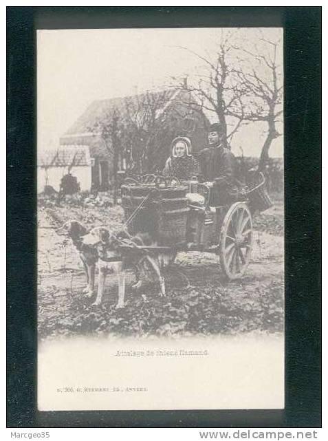 Attelage De Chiens Flamand édit.hermans à Anvers N° 366 Bel Attelage De Chien Beau Plan , Précurseur - Belgique