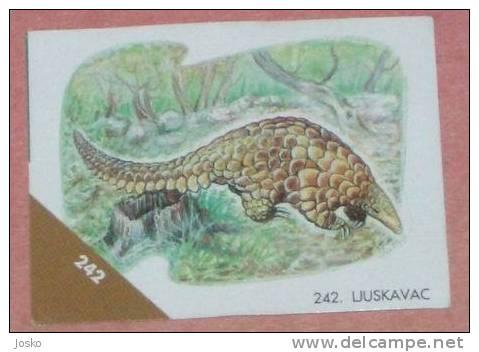 PANGOLIN ( Croatia Sticker ) Pangolins Pholidota Manis Scaly Anteater Or Tenggiling - Croatie Autocollant - Stickers