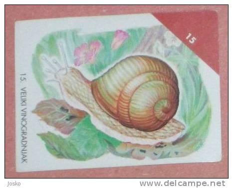 SNAIL ( Croatia Sticker ) Escargot Colimaçon Caracol Schnecke Lumaca Slak Snails Shell Shells - Croatie Autocollant - Unclassified