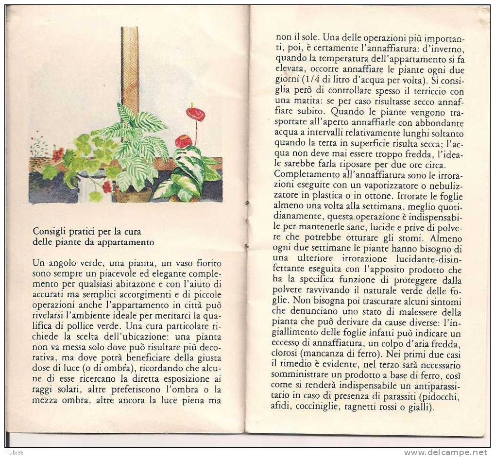 IL GIARDINO IN CASA - BAYSOL - BAYER - CONSIGLI PER LE PIANTE DI APPARTAMENTO  - PAGG. 8 - A. Piante Verdi