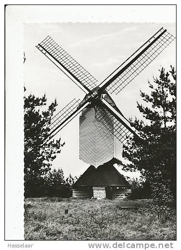 Overpelt - Windmolen - Overpelt