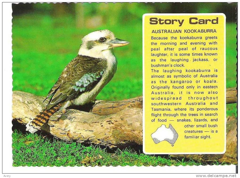 Australian Kookaburra Story Card - Birds