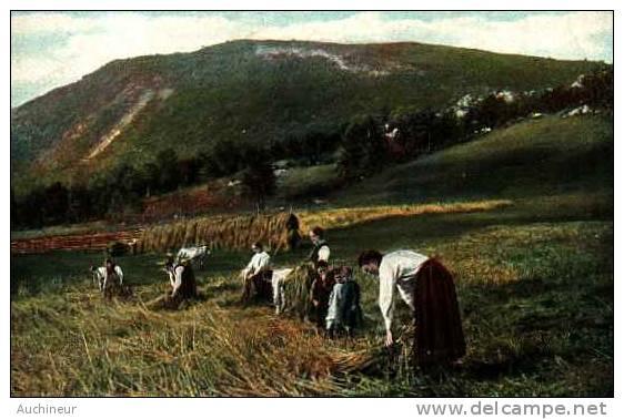 Foin, Blé - Glaneuse - T E L 860-7 - Cultivation