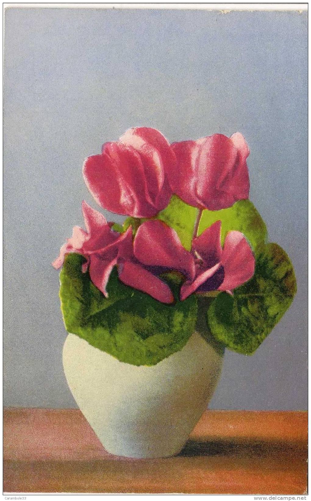 CPA  Bouquet Cyclamen Pot      Y5/413 - Flowers, Plants & Trees