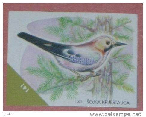 JAY  ( Croatia Sticker ) Eichelhäher Ghiandaia Gaii Bird Oiseau Ave Pajaro Vogel Uccello Birds Croatie Autocollant - Stickers