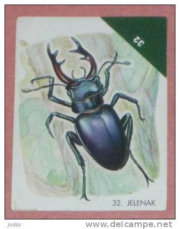 STAGBEETLE ( Croatia Sticker ) Hirschkäferzange Insectes Insects Insectos Insekt Insetto Inseto Croatie Autocollant - Stickers
